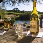 Savor Sonoma Wine Country!